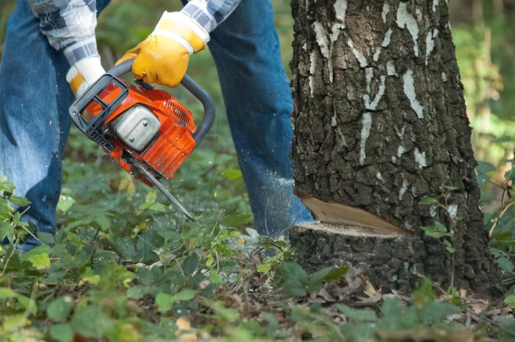 New Haven Tree Pros - Tree Removal