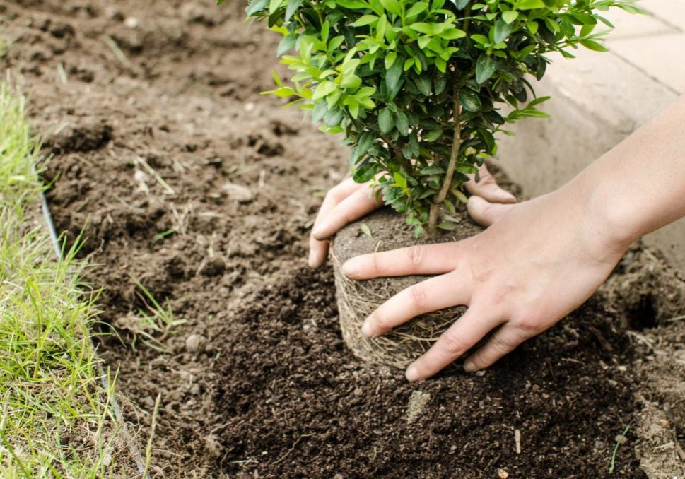 New Haven Tree Pros - Tree Planting and Transplanting