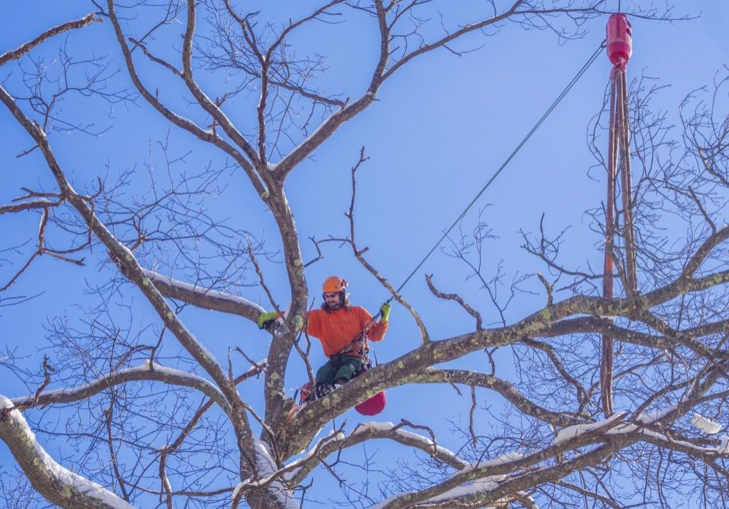 New Haven Tree Pros - Tree Trimming and Pruning 2